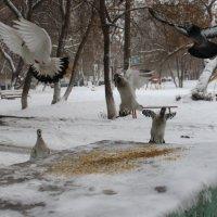 Зимним утром :: Лена Реснянская