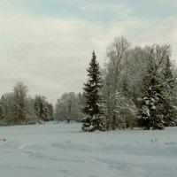 Зимний парк :: Олег Попков