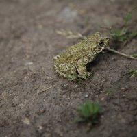 Царевна-лягушка :: Виктория Н