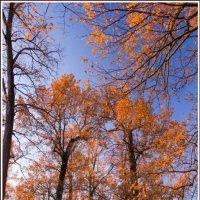 осень золотая :: Svettic vvv