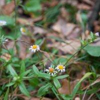 цветы в осеннем лесу :: Anna Makar