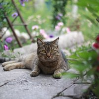 Котик :: Эльвира Абдрахманова