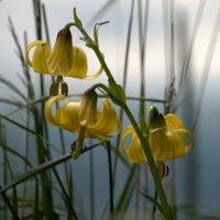 Цветы луговые. :: ФотоЛюбка *