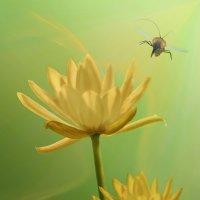 Вальс цветов..... :: Inga Керрен