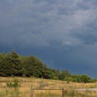 Лес перед грозой :: Ева Вейт