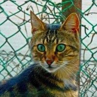 здравствуйте, я ваша кошка :: Александр Корчемный