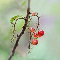 В косичку ягоды вплелись... :: Валерий Басыров