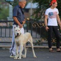 человек и собака :: Alima Назарова