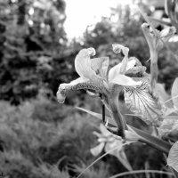 В большом саду :: Мария Нутвок