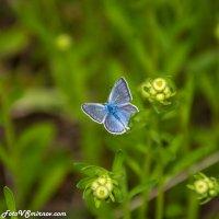 Лететь с одним крылом... :: Валерий Смирнов