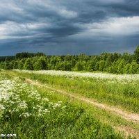 Перед грозой :: Валерий Смирнов