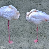 Урок симметричной арт композиции от грациозных фламинго. :: Виталий Половинко