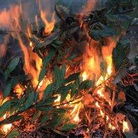 Пламнем охваченный... :: Nota Bene