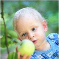 Первое яблоко.... :: Anatolij Maniuto