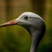 BirdFace :: Борис Б