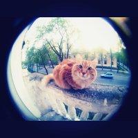 рыжий кот :: Viktoria Holodova