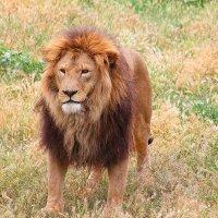 King 2 :: KatRina K