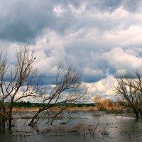 Дождливый июнь :: Евгений Юрков