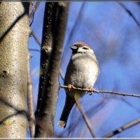 в лесу весной :: linnud