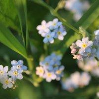 цветочки :: Ирина Рыкина