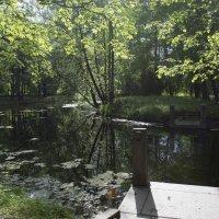 В Александровском парке (июнь) :: Владимир Фомин