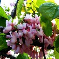 весенние цветы :: Varvara Aravrav