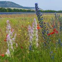 Полевые цветы :: Игорь Кузьмин