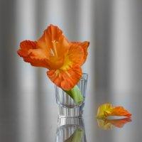 цветок ириса :: Slava Hamamoto