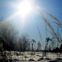 Под солнцем :: Катя Бокова