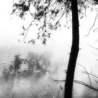Не много солнца в мутной воде... :: Валерий Молоток