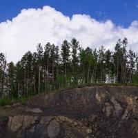 лес на камнях :: Роман Синельников