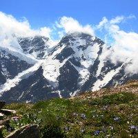 скромные цветы гор :: Alexander Varykhanov