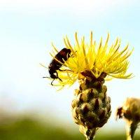 Волосатый жук :: Виктор Лавриченко