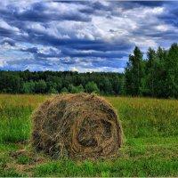 Готовь корма летом :: Андрей Куприянов