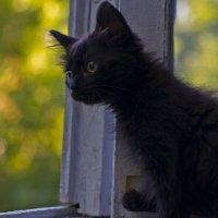 Любопытство не порок ... :: Ольга Винницкая