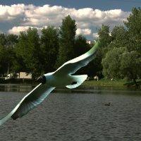 У озера :: Viacheslav Birukov