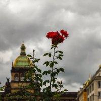 в Праге :: Вадим Мирзиянов