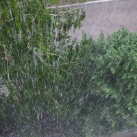 Люблю дождь! :: Мэдинэ Папина