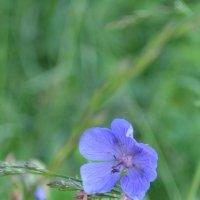 Цветок :: Аксана Чертихина