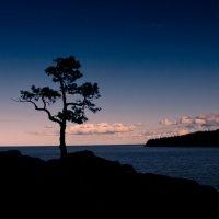 На севере диком стоит одиноко на голой вершине сосна... :: Максим Гуревич