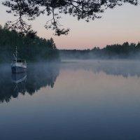 Туманное утро самой короткой ночи. :: Максим Гуревич