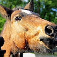 милая лошадка :: Tasha Скосырева
