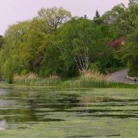 Уголок парка в Торонто (1) :: Юрий Поляков
