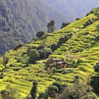 Гималаи...Непал. :: Александр Вивчарик