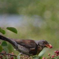 птица :: Олеся Н
