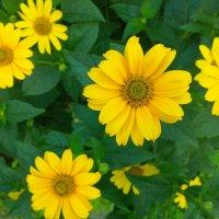 Цветы :: Serg