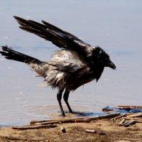 морская ванна :: linnud