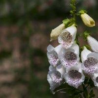 цветы :: юрий fff