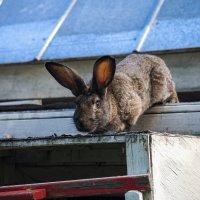 Побег из крольчатника :: Константин Смирнов