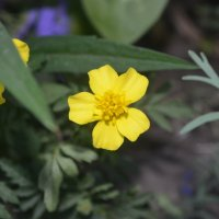 Цветок 1 :: Юля